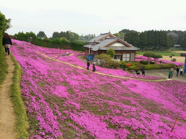 jardin fleur japonais